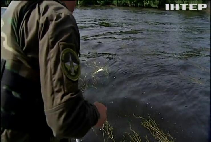 На Київському водосховищі масово гине риба