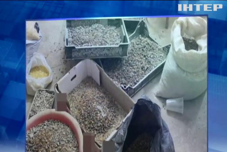 На Волині обробляли бурштин для контрабандного експорту в ОАЕ