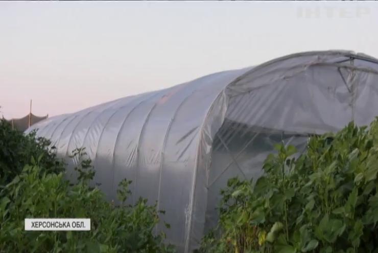 На Херсонщині виявили конопляну ферму