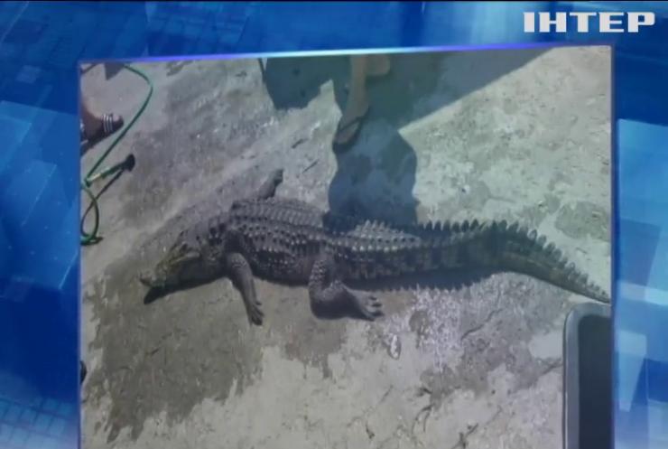 На Херсонщині знайшли озеро з крокодилом
