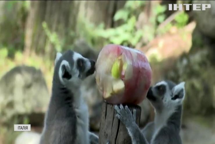 """Для мешканців зоопарку у Римі влаштували """"крижаний"""" банкет"""
