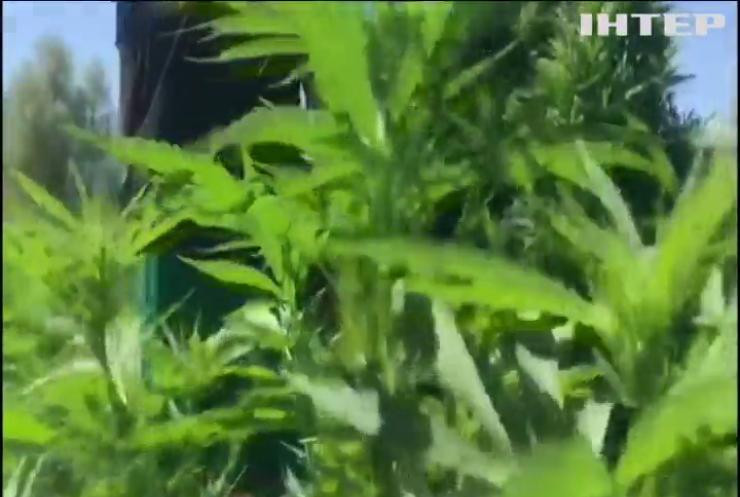 На Херсонщині поліцейські виявили плантацію конопель