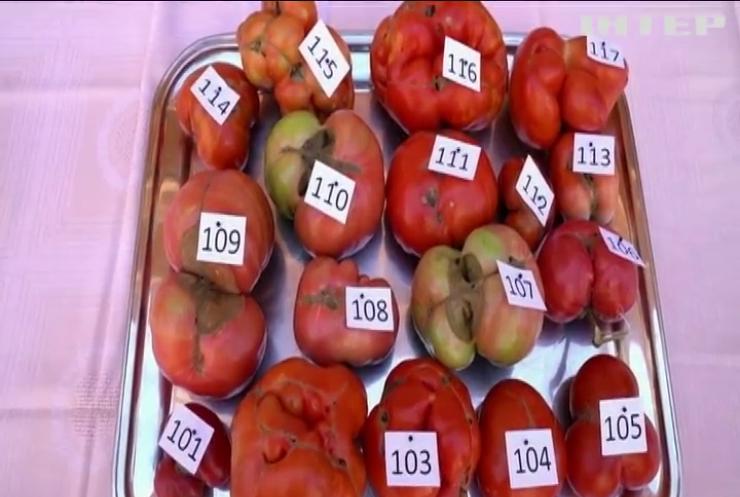 Іспанці обрали найпотворніший помідор у містечку Тудела