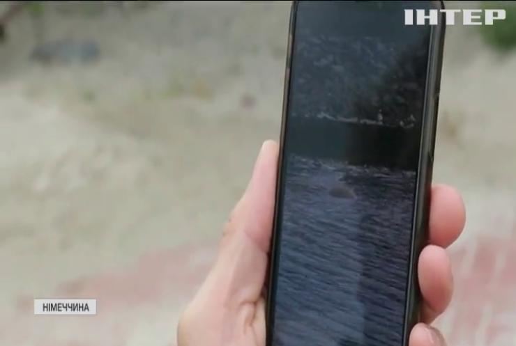 Незвичні гості на німецькому острові: там оселилася самиця моржа