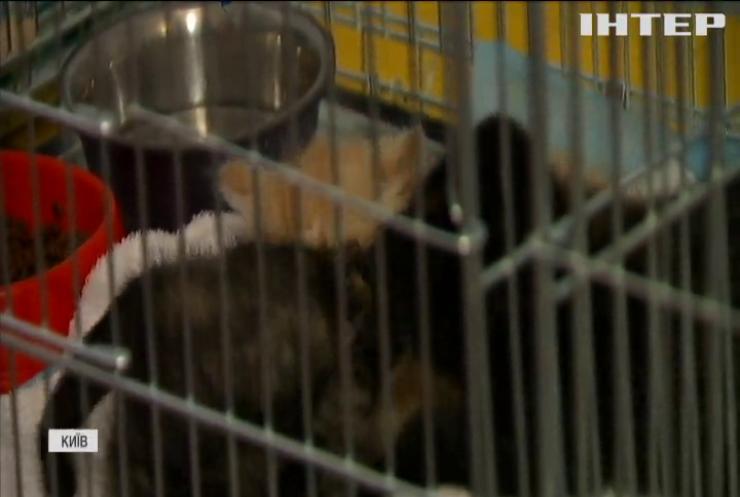 У Києві безпритульним котам шукали домівки