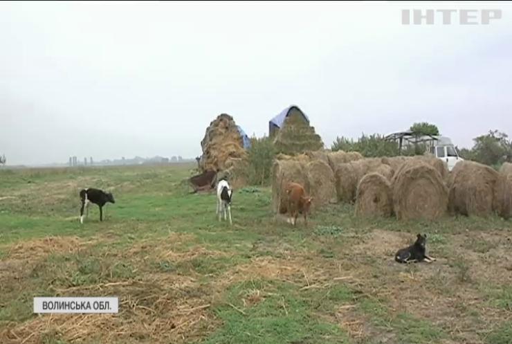 Работоргівля на Волині: фермерка силоміць утримувала чоловіків