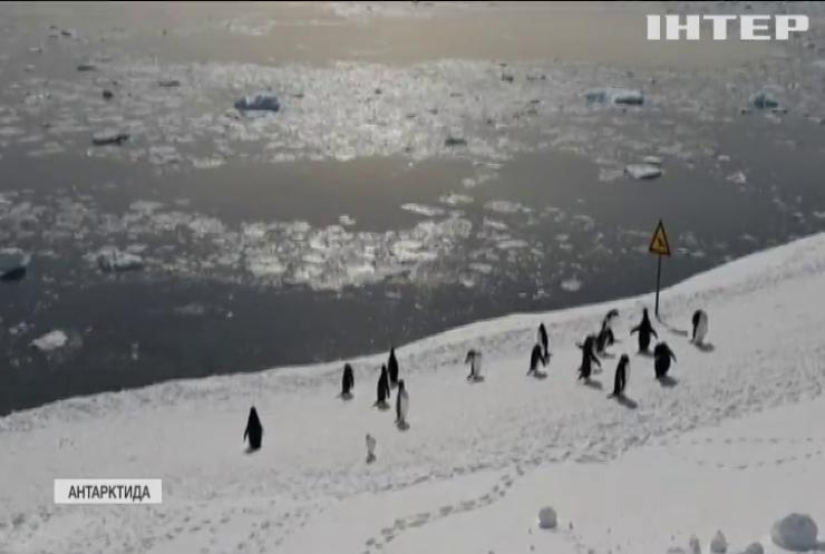 """У центрі """"Академік Вернадський"""" відбирають науковців, які поїдуть в Антарктиду вивчати кліматичні зміни"""