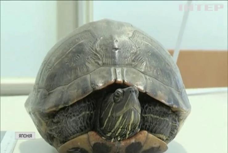 В Японії черепаха затримала п'ять авіарейсів