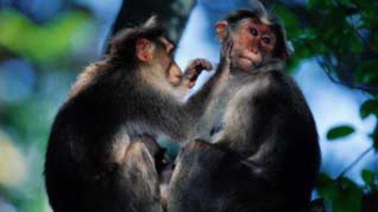 Технология секса женщины с обезьяной