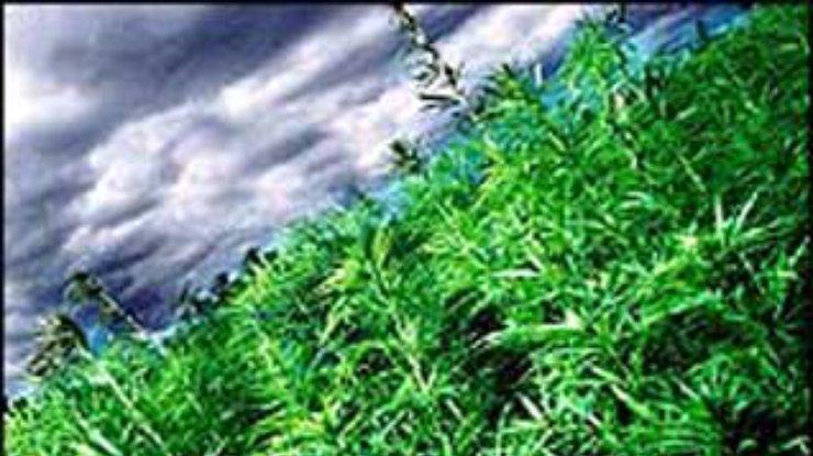 Конопля от артрита семена конопли курьер доставка