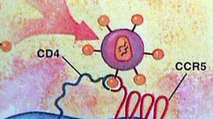 мутация ccr5 delta 32