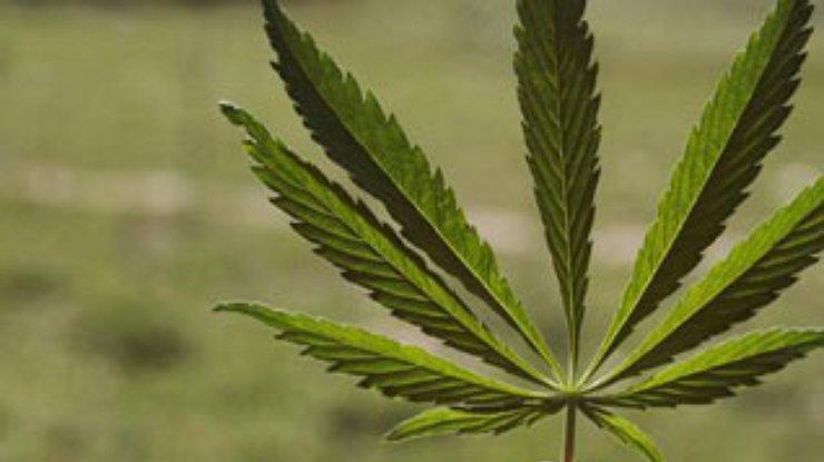 Конопля при спиде парни марихуана