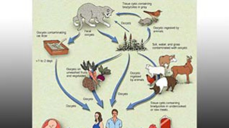 паразиты теле человека виды