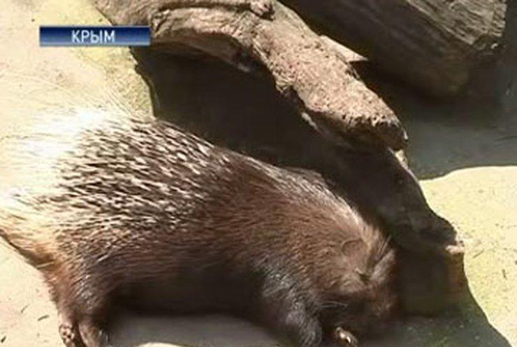 В Ялтинском зоопарке гибнут животные