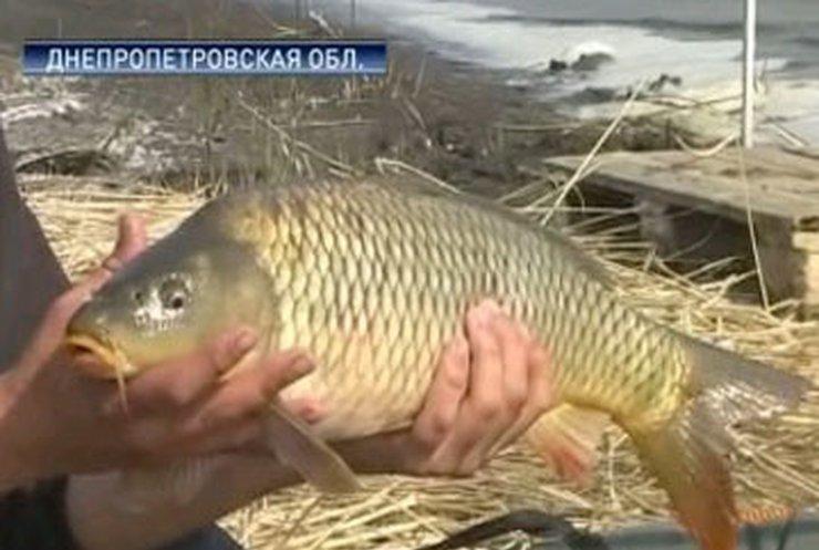 На Днепропетровщине открылся чемпионат по ловле карпа