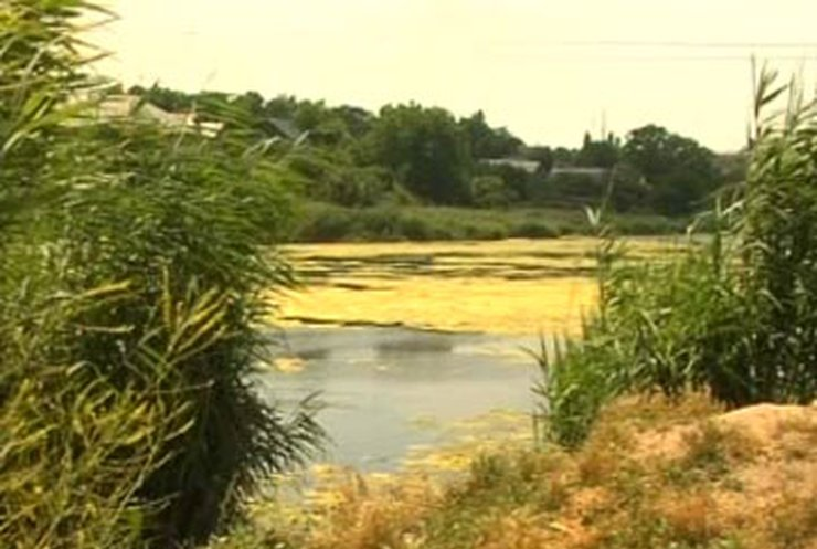 В Одессе пытаются поймать из пруда крокодила