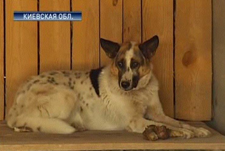 Журналисты посетили Бородянский приют для бездомных животных