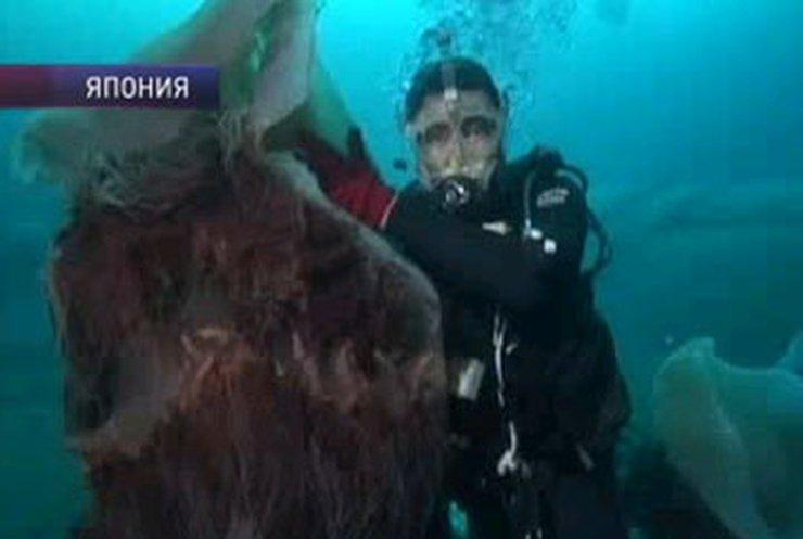 Японию атакуют гигантские медузы
