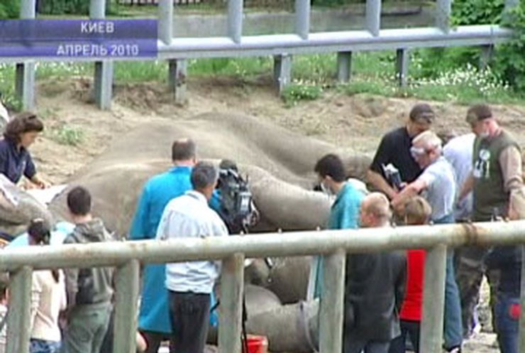 Что на самом деле происходит в Киевском зоопарке?