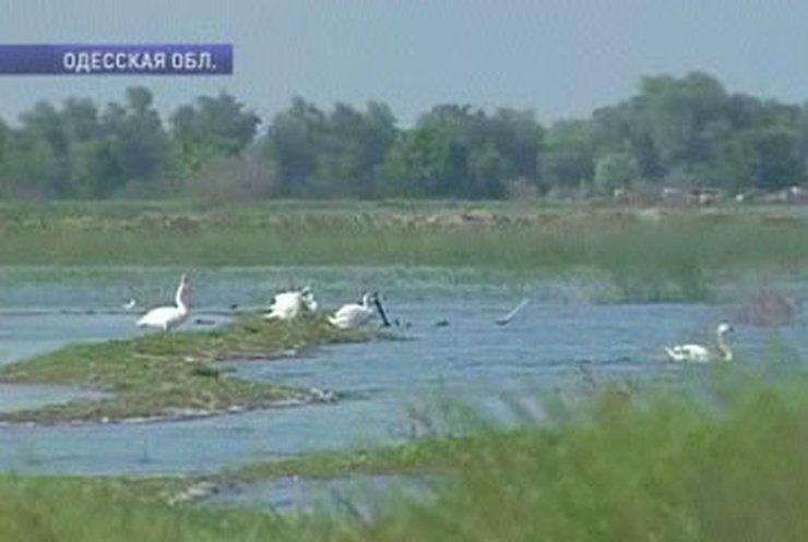 Экологи вернули жизнь на остров в дельте Дуная