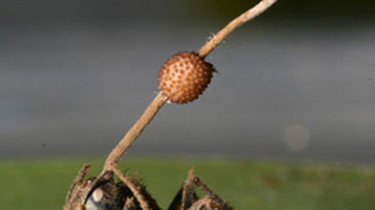 какими травами избавиться от паразитов
