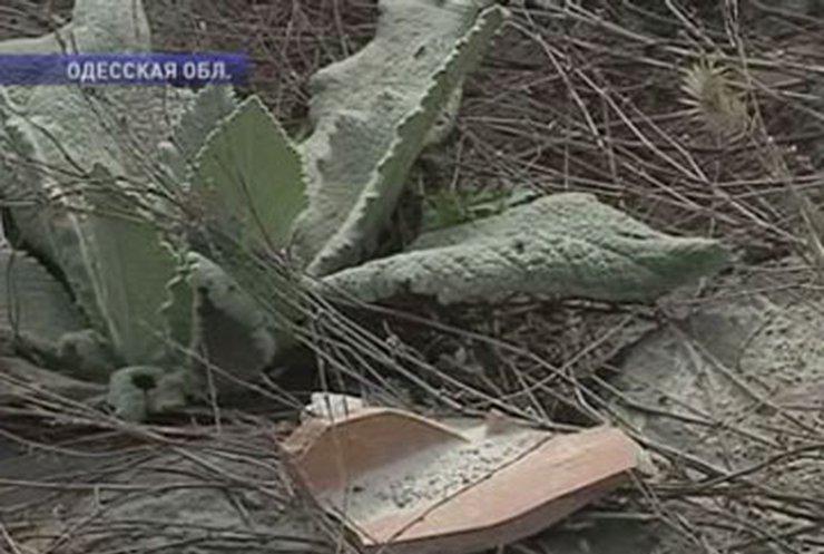 """""""Черная археология"""" достигла в Украине угрожающих масштабов"""