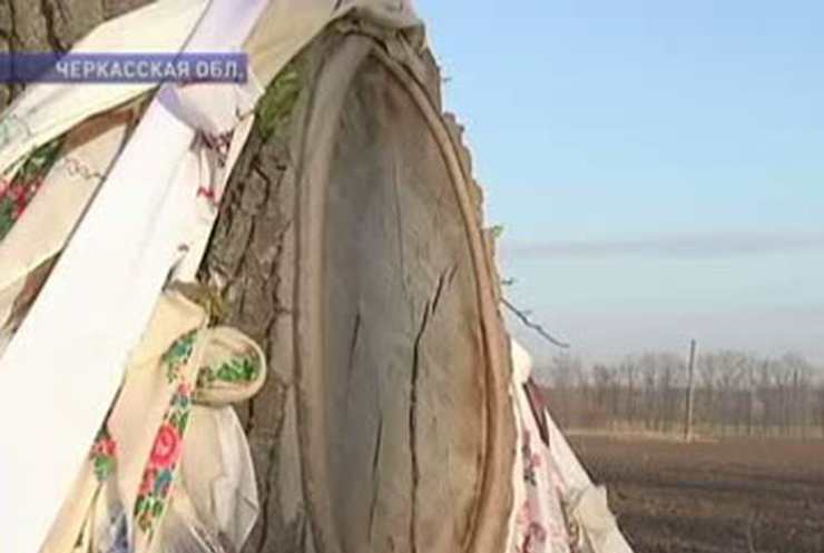 Паломники едут в Черкассы - молиться лику Николая Чудотворца на срезе осины