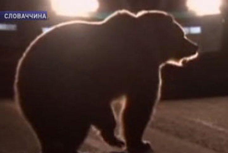 В Словакии полицейские застрелили медведя