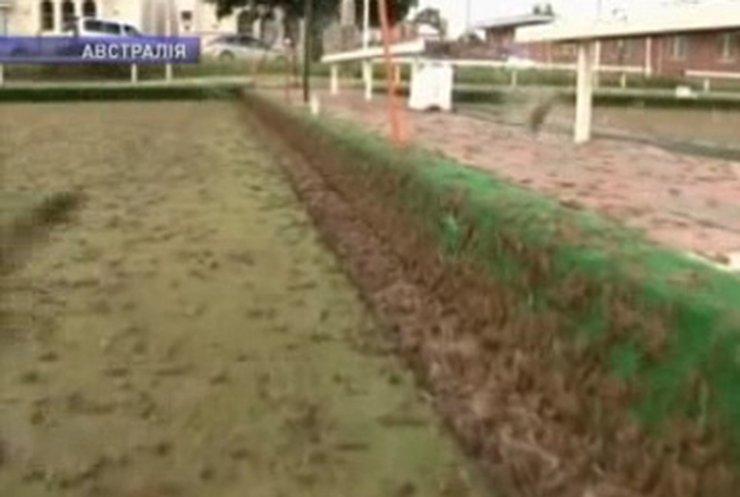 Австралийские фермеры страдают от нашествия саранчи
