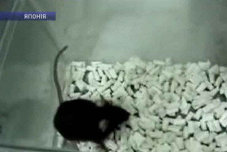Японские ученые научили мышей петь