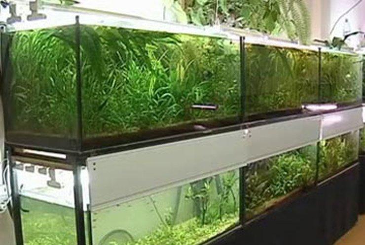 В Одессе открылись государственные курсы аквариумистики