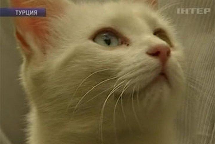 Символ 2011 года – кошка – когда-то была только белой и глухой
