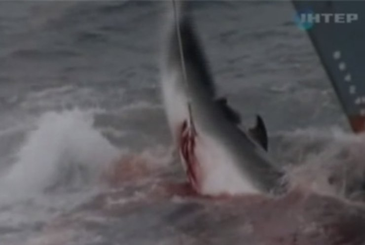 Японские китобои временно приостановили свой промысел