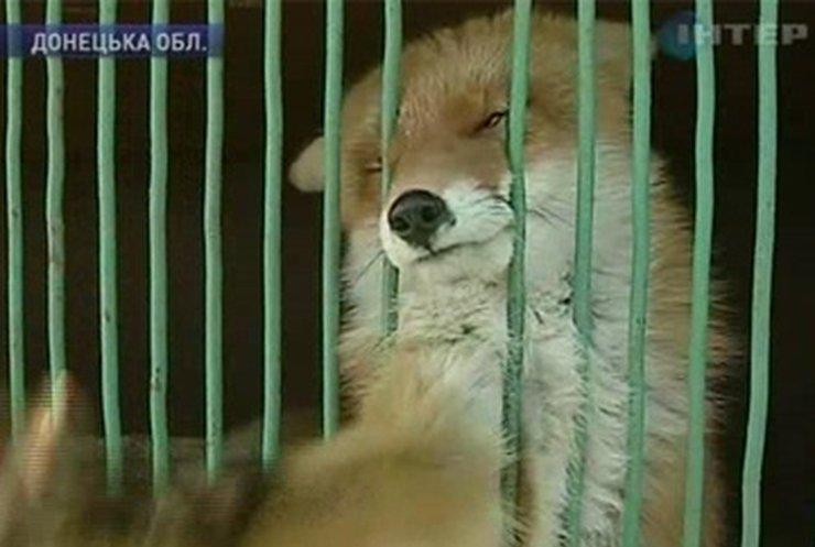 Зоопарк в Донецкой области нуждается в поддержке