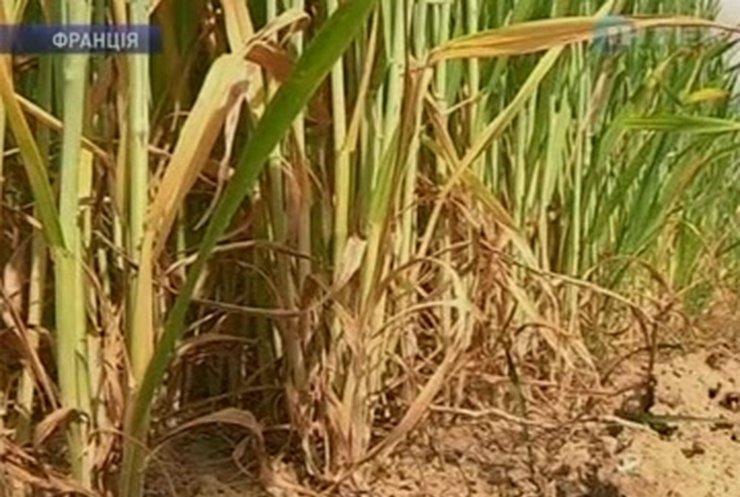 Французские фермеры страдают от засухи