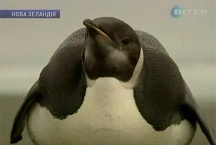 Потерявшийся пингвин проплыл 6 тысяч километров