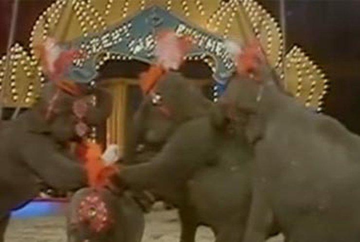 В Великобритании хотят запретить цирковые выступления с животными