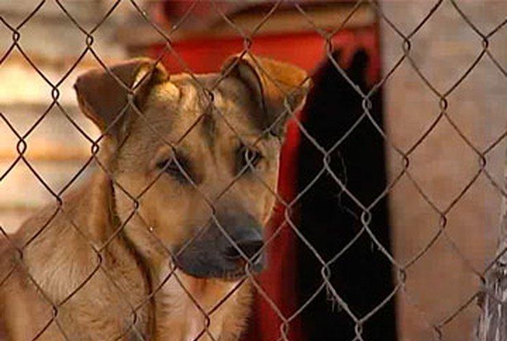 Крупнейший приют для домашних животных в Киевской области может оказаться на улице