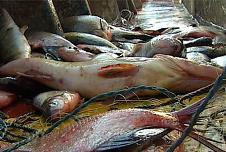 В украинских реках становится все меньше рыбы