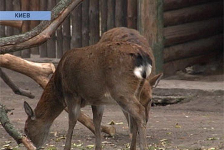 Киевскому зоопарку за долги заморозили счета