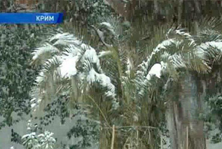 В Крыму от неожиданной зимы спасают пальмы и бананы
