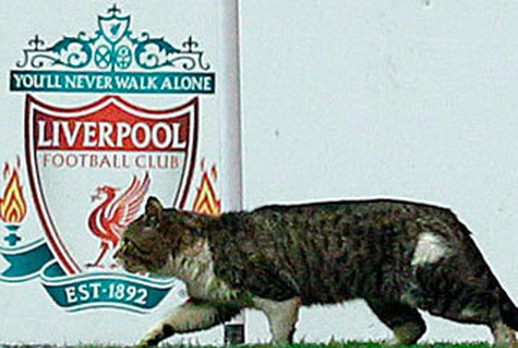 Кот, выбежавший на футбольное поле, стал звездой интернета