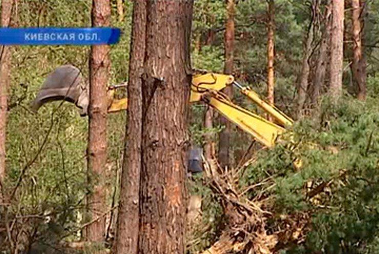Жители Ирпеня пришли на сессию горсовета, защищая от вырубки парки