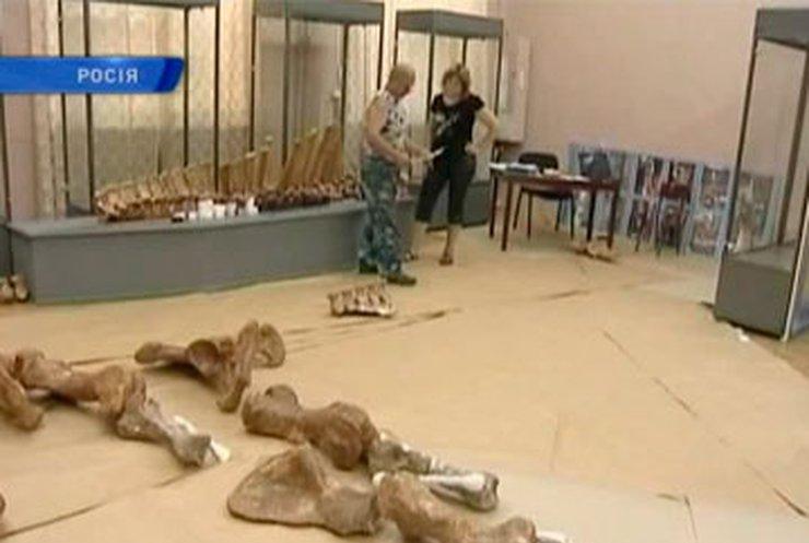 В азовском музее-заповеднике воссоздают скелет древнего носорога