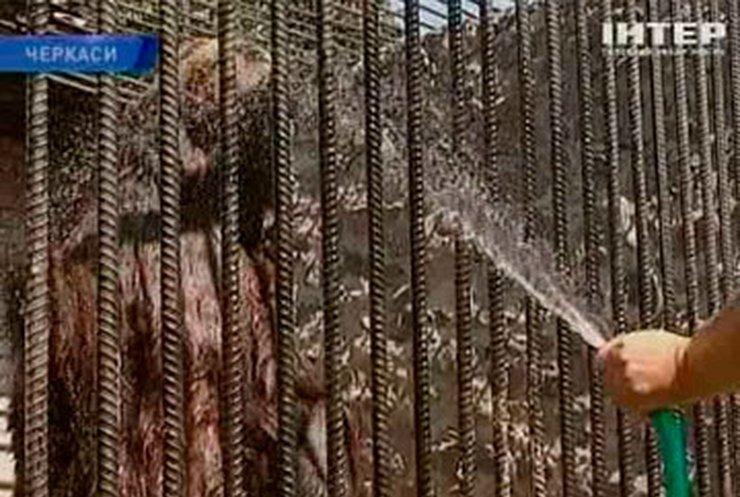 Работники черкасского зоопарка помогают животным справиться с жарой