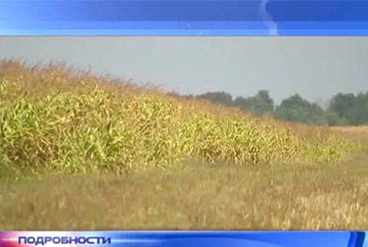 Украинские фермеры истощают плодородные почвы
