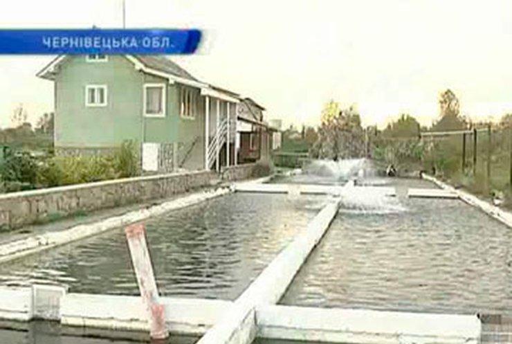 Черновицкий предприниматель создал собственную ферму лососевых и осетровых