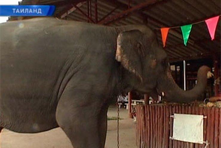 Тайские слоны получают пенсию