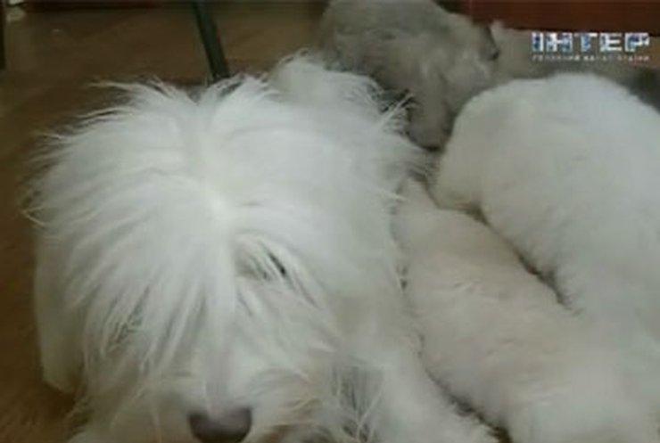 В Одессе вывели новую породу собак