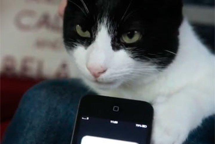 Самый громкий кот в мире перемурлыкал шум метро и дрель